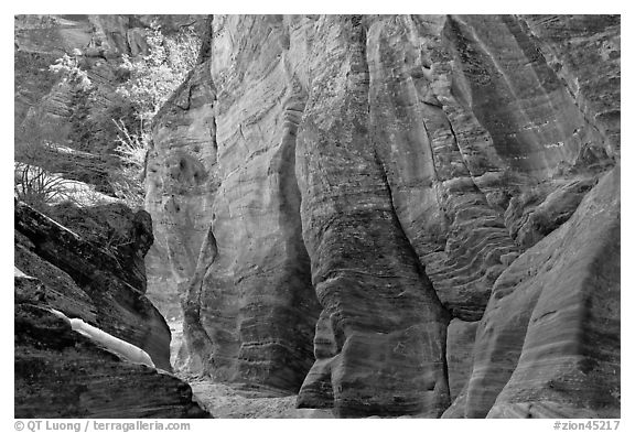 Rocks sculptured by water, Zion Plateau. Zion National Park (black and white)