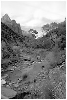 Virgin River in Zion Canyon, afternoon. Zion National Park, Utah, USA. (black and white)
