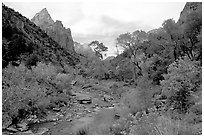 Zion Canyon and Virgin River in the fall. Zion National Park, Utah, USA. (black and white)