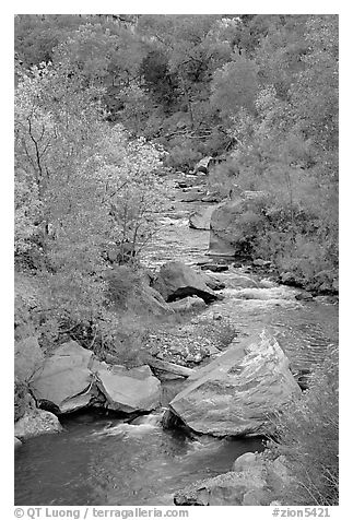 Virgin river, boulders, and trees. Zion National Park (black and white)