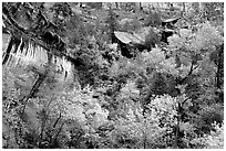 Sandstone cliff, waterfall, and trees in autum colors l. Zion National Park, Utah, USA. (black and white)