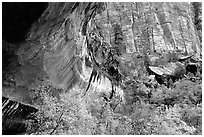 Sandstone cliff and trees in autumn foliage. Zion National Park ( black and white)