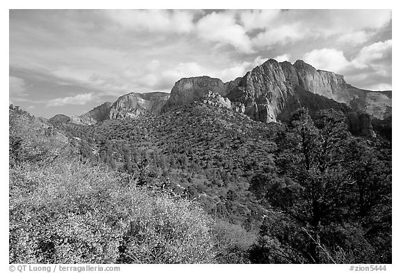 Finger canyons of the Kolob. Zion National Park (black and white)