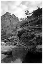 Left Fork of the North Creek. Zion National Park ( black and white)