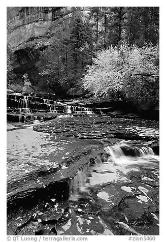 Cascades over terraces, Left Fork of the North Creek. Zion National Park (black and white)