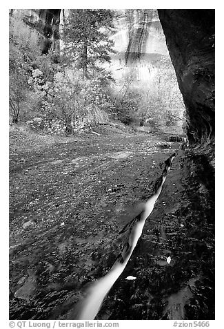 Left Fork of North Creek flowing in six inch wide crack. Zion National Park (black and white)