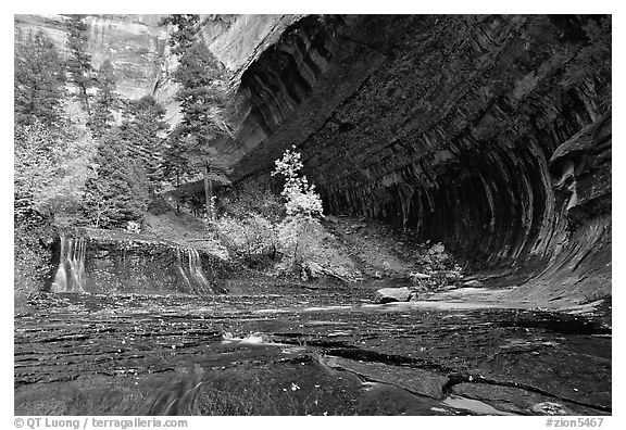 Cascade and alcove, Left Fork of the North Creek. Zion National Park (black and white)