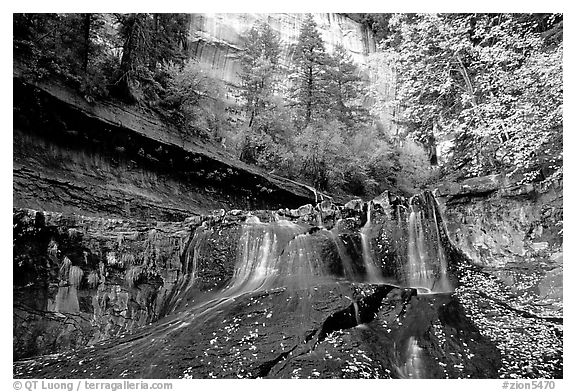 Cascade and tree in autumn foliage, Left Fork of the North Creek. Zion National Park (black and white)