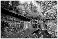 Cascade and tree in autumn foliage, Left Fork of the North Creek. Zion National Park, Utah, USA. (black and white)