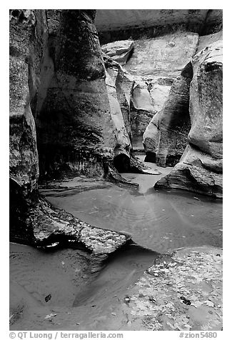 Pools and sculptured sandstone walls, the Subway, Left Fork of the North Creek. Zion National Park (black and white)