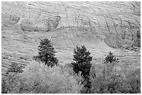 Trees and Checkerboard patterns, Mesa area. Zion National Park ( black and white)