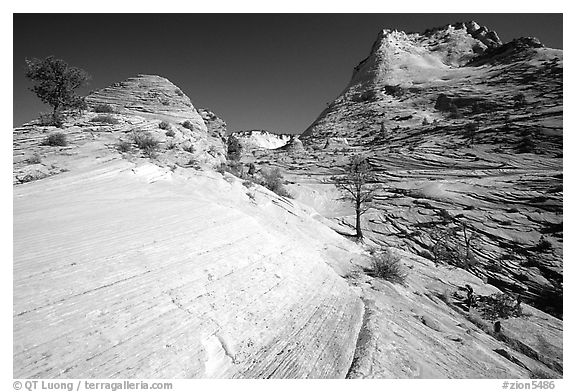 Sandstone circular striations, Zion Plateau. Zion National Park (black and white)