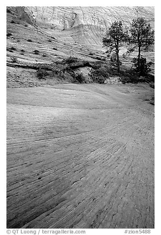 Sandstone striations, Zion Plateau. Zion National Park (black and white)