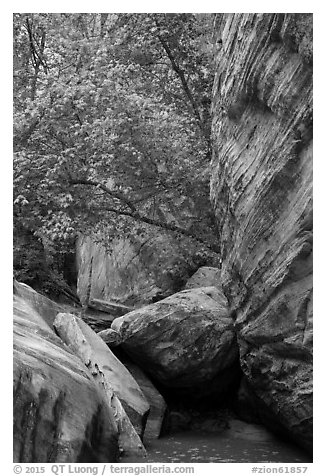 Boulders, trees, and cliffs, Hidden Canyon. Zion National Park (black and white)