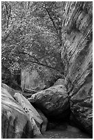 Boulders, trees, and cliffs, Hidden Canyon. Zion National Park ( black and white)