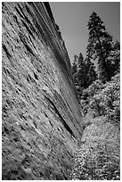Stark canyon wall and trees, Mystery Canyon. Zion National Park ( black and white)