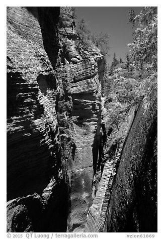 Narrows, Mystery Canyon. Zion National Park (black and white)