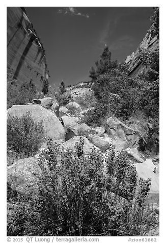 Boulders and landslide, Mystery Canyon. Zion National Park (black and white)