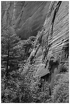 Verdant vegetation and canyon walls, Mystery Canyon. Zion National Park ( black and white)