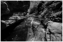 Frog and stream, Mystery Canyon. Zion National Park ( black and white)
