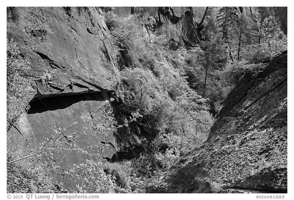 Verdant Mystery Canyon. Zion National Park (black and white)