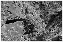 Verdant Mystery Canyon. Zion National Park ( black and white)