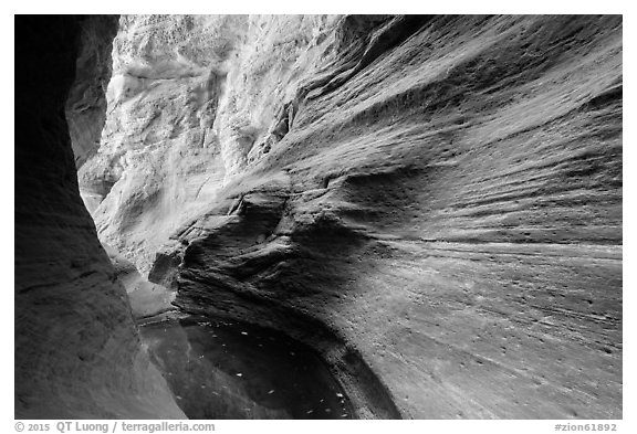 Water-sculpted canyon and pool, Mystery Canyon. Zion National Park (black and white)