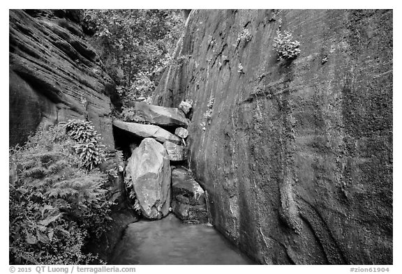 Canyon walls and stream, Mystery Canyon. Zion National Park (black and white)