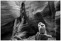 Two juvenile owls in sculpted chamber, Pine Creek Canyon. Zion National Park ( black and white)