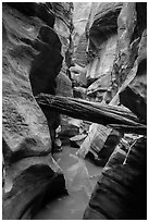 Stuck log in flooded canyon, Pine Creek Canyon. Zion National Park ( black and white)