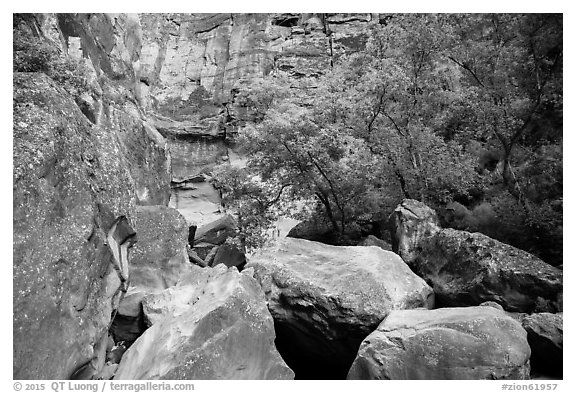 Huge boulders and trees, Pine Creek Canyon. Zion National Park (black and white)