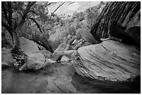 Pool, bouders, and trees, Pine Creek Canyon. Zion National Park ( black and white)