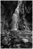 Virgin River flowing between soaring walls, the Narrows. Zion National Park ( black and white)