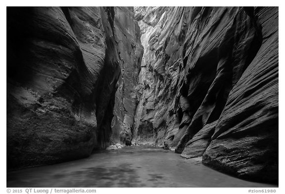 Soaring dark walls, the Narrows. Zion National Park (black and white)