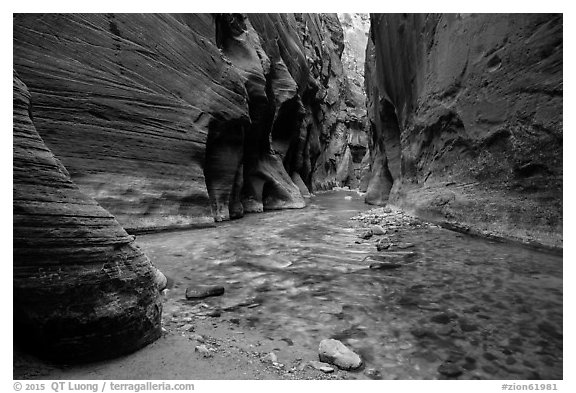 The Narrows at the Orderville confluence. Zion National Park (black and white)