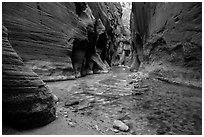 The Narrows at the Orderville confluence. Zion National Park ( black and white)