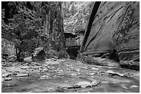 Wide section of Virgin River and forest in the Narrows. Zion National Park ( black and white)