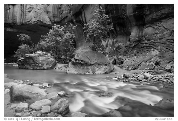 Trees in early summer and alcove, the Narrows. Zion National Park (black and white)