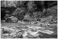 Trees in early summer and alcove, the Narrows. Zion National Park ( black and white)