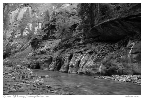 Cliffs with trees, the Narrows. Zion National Park (black and white)