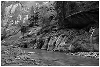 Cliffs with trees, the Narrows. Zion National Park ( black and white)