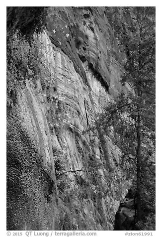 Canyon wall with wildflowers. Zion National Park (black and white)