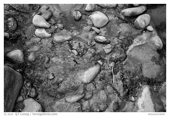 Rocks and oils. Zion National Park (black and white)