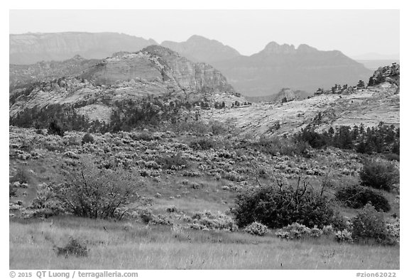 Grasses and sandstone, Kolob Terraces. Zion National Park (black and white)