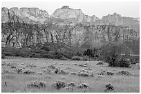 Tall grasses and rock towers, Kolob Terraces. Zion National Park ( black and white)