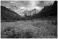 Wildflowers line up meadow under Towers of the Virgin. Zion National Park ( black and white)