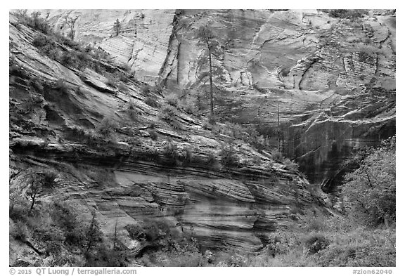 Echo Canyon. Zion National Park (black and white)