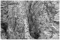 Pocket of forest on steep cliffs. Zion National Park ( black and white)