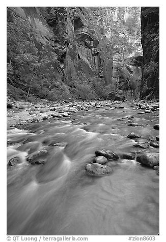 Virgin River and steep canyon walls in the Narrows. Zion National Park (black and white)