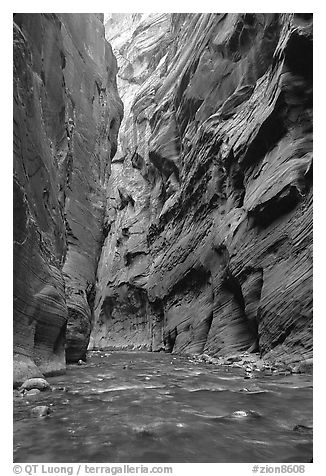 Slot canyon like walls, Wall Street, the Narrows. Zion National Park, Utah, USA.